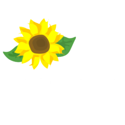 Sunflower- graphics and illustrations agency